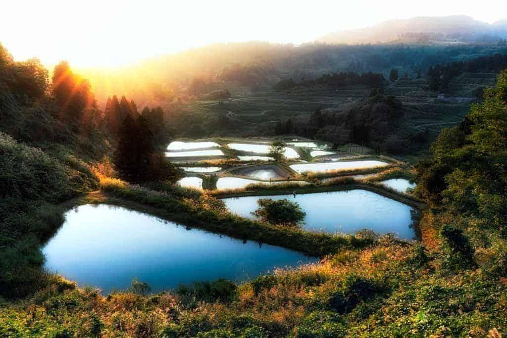 Yamakoshi Rice Field Sunset