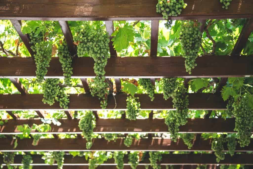 Yarra Valley Melbourne Day Trips