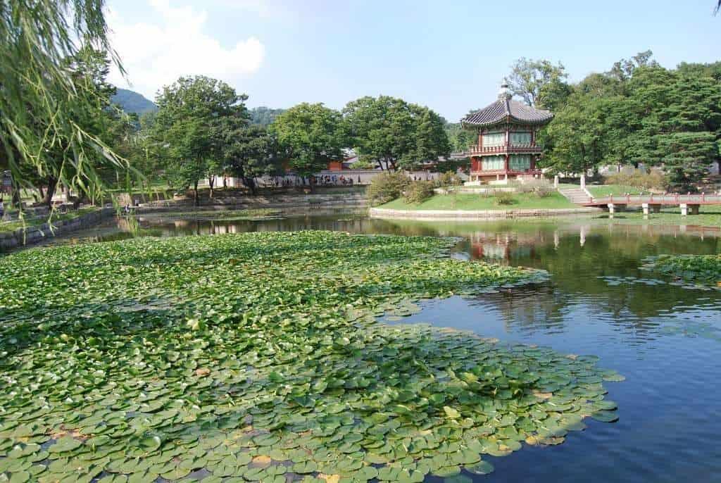 A Garden In Seoul
