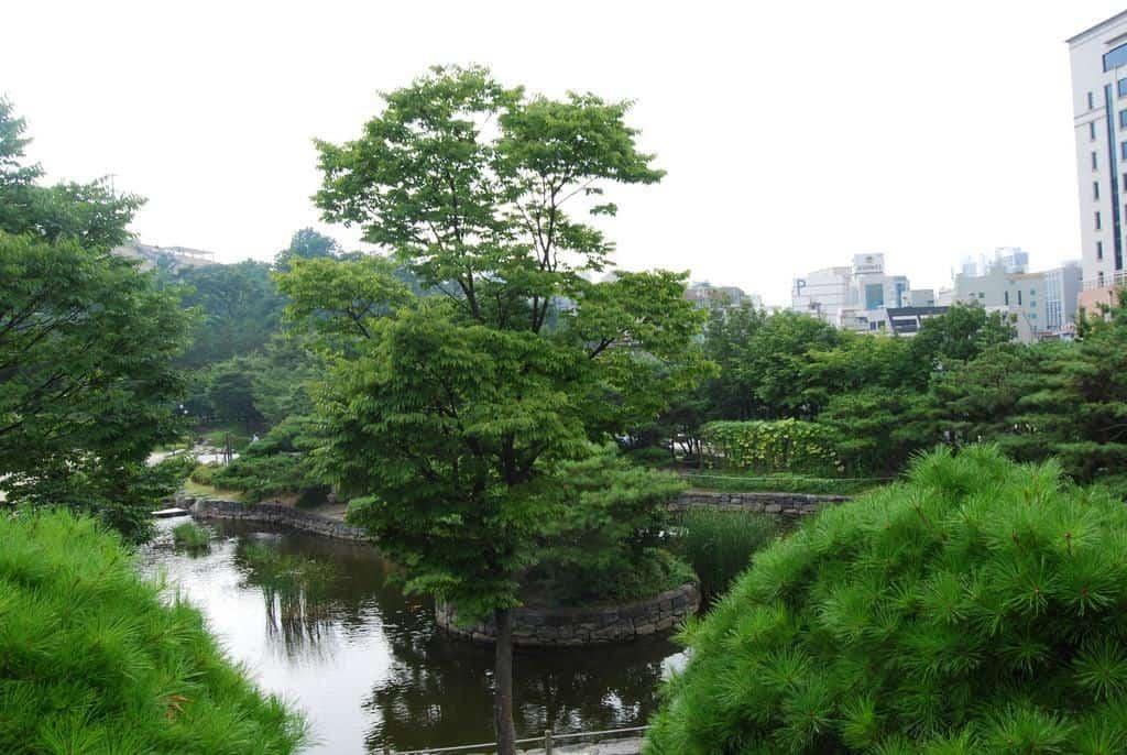 A Local Park In Seoul
