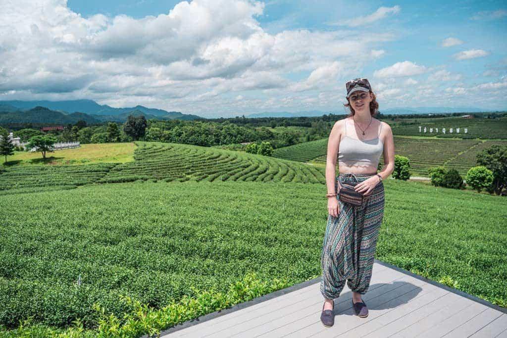 Choui Fong's Mae Chan Tea Plantation
