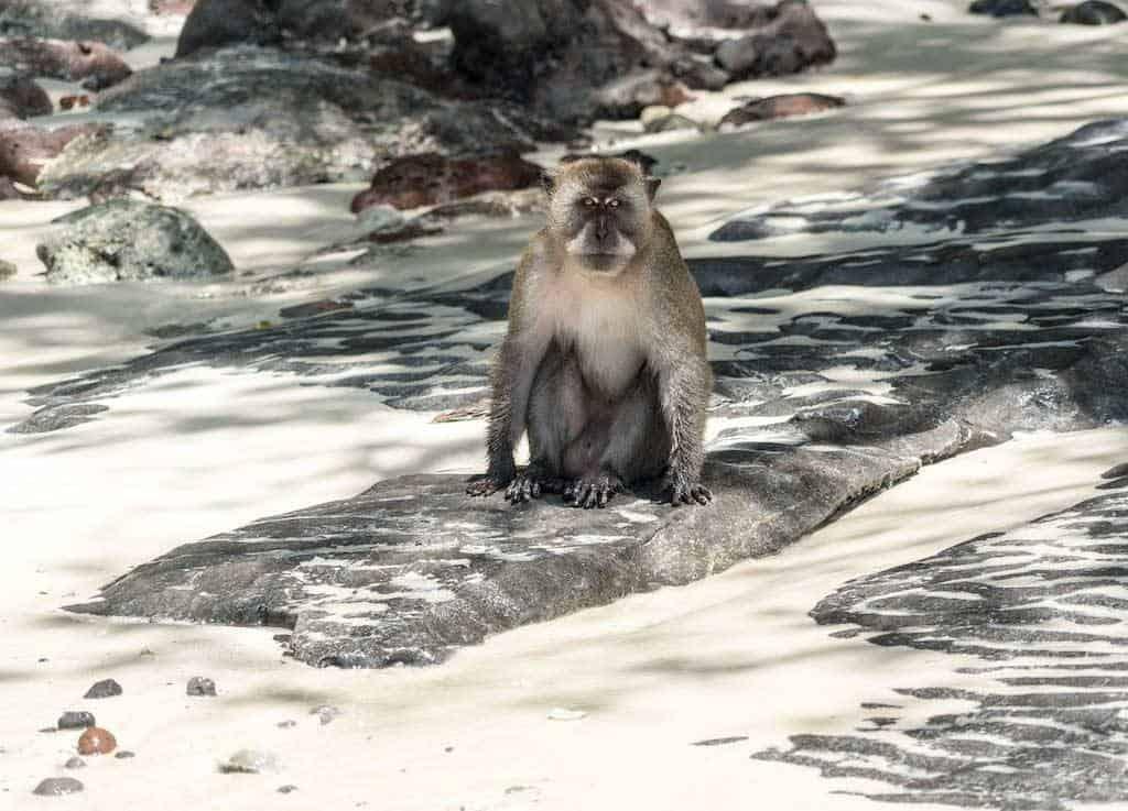 Monkey Beach Koh Phi Phi