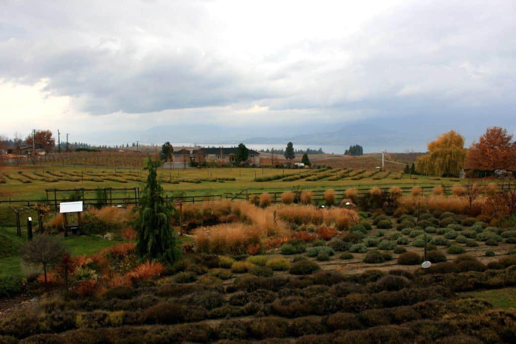 Kelowna Lavender Farm