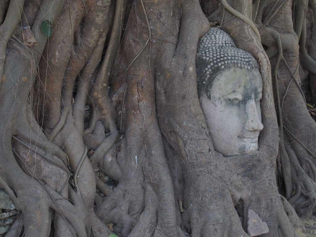 Ayutthaya Buddha Head Day Trips From Bangkok