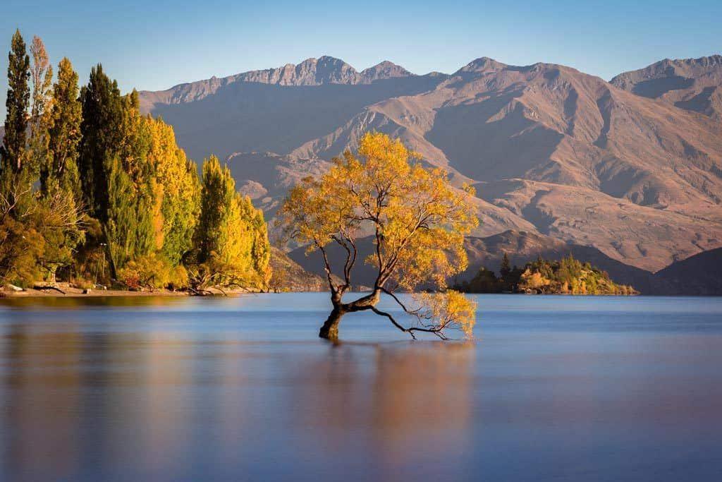 Focus Point Wanaka Tree