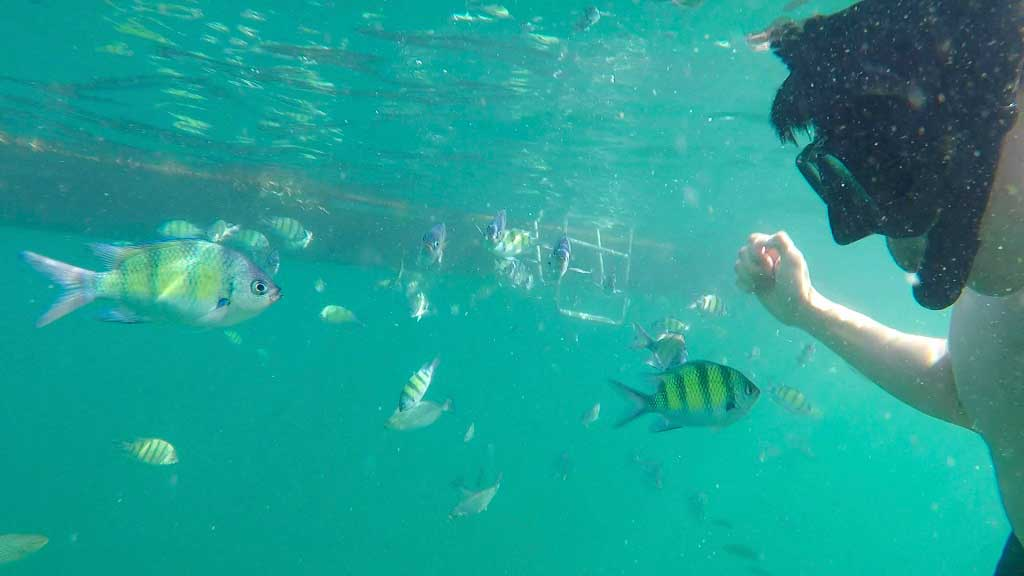 Snorkeling with the fish in Chicken Island.