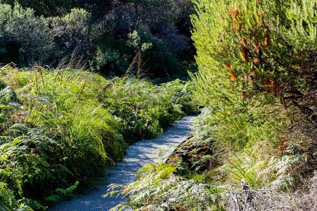 Grassy Green Path