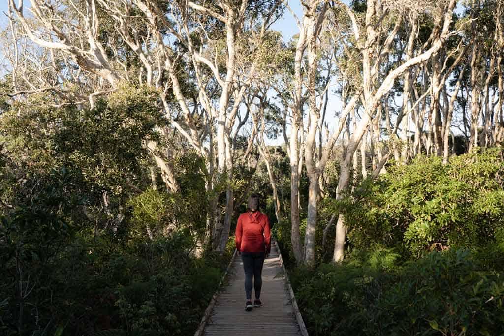Walking In Trees