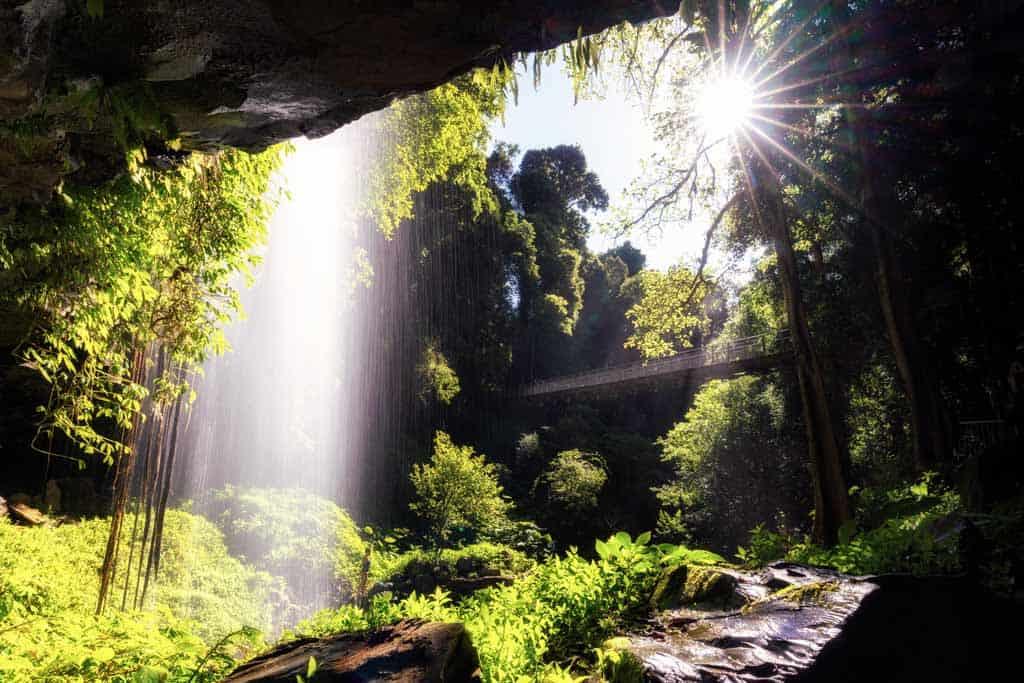 Crystal Falls Dorrigo National Park
