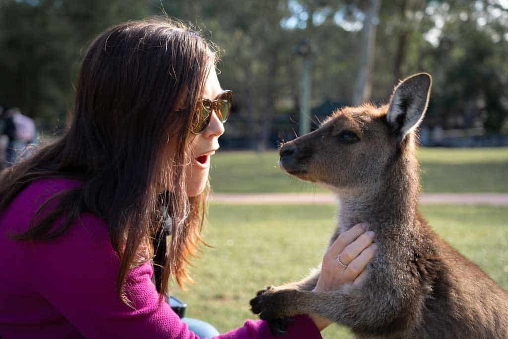 Kangaroo Petting Australian Reptile Park