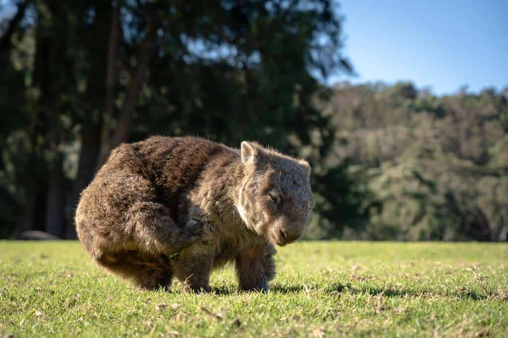 Wombat Bendeela Campground
