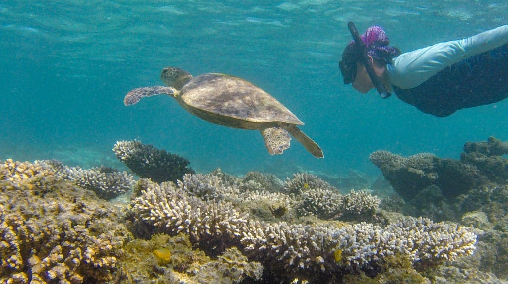 Turtles, corals and marine life