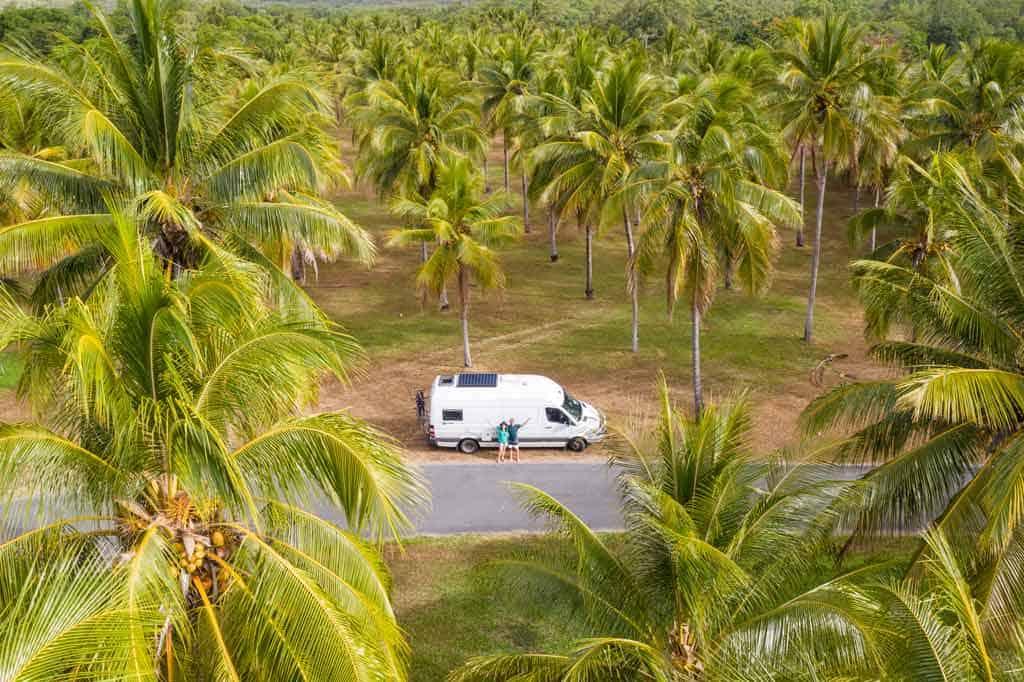 Thala Palm Trees Queensland