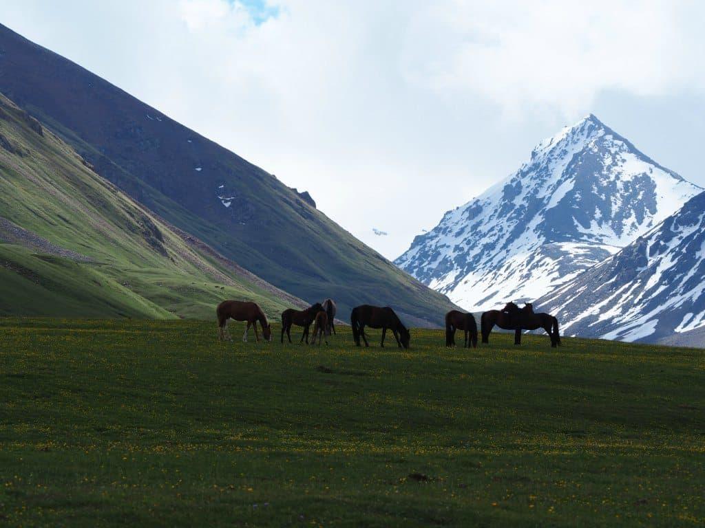 Horses At Kol Ukok