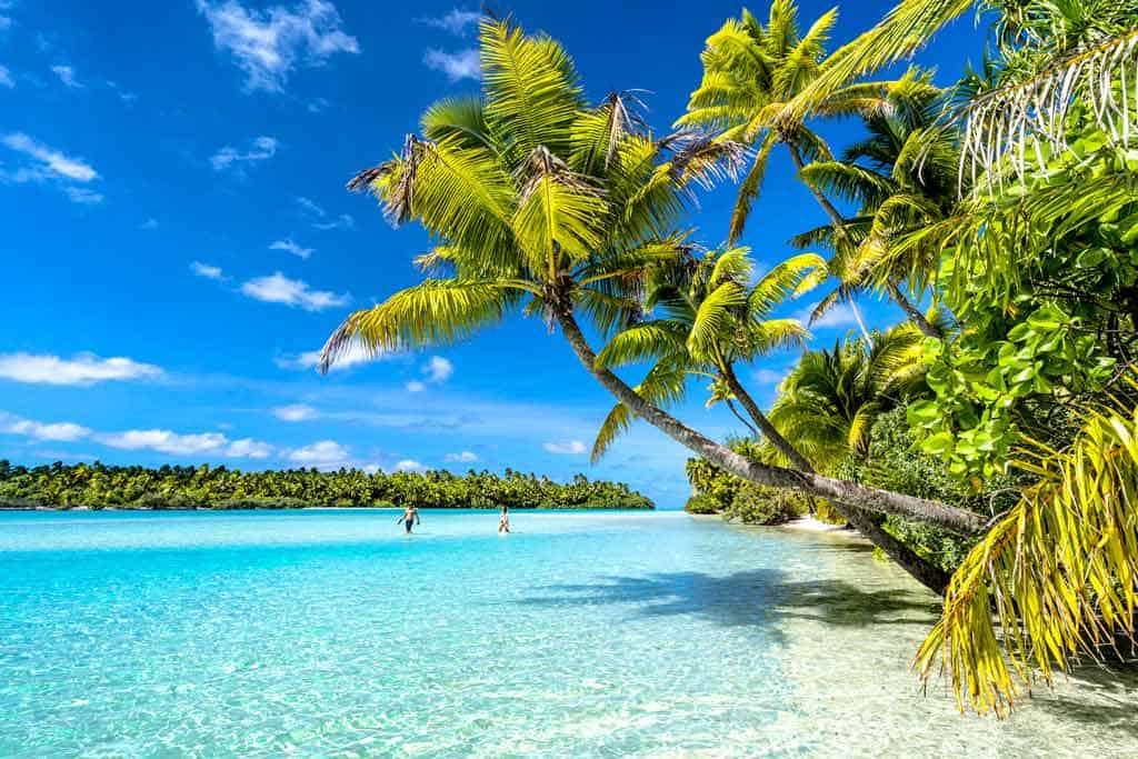 Palm Trees Aitutaki Landscape