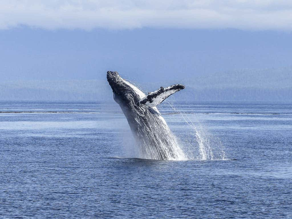 Whale Watching Is One Of The Best Things To Do In Albany