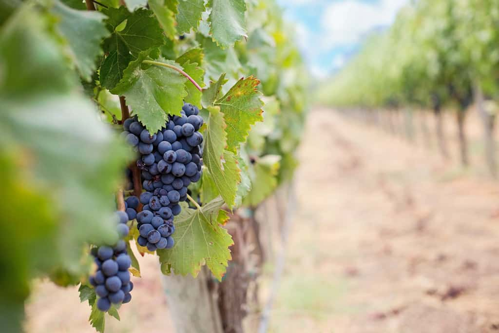 Wine Tours Are One Of The Best Things To Do In Margaret River