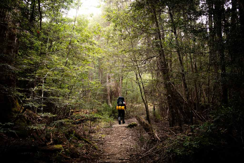 Hiking Through Rainforest