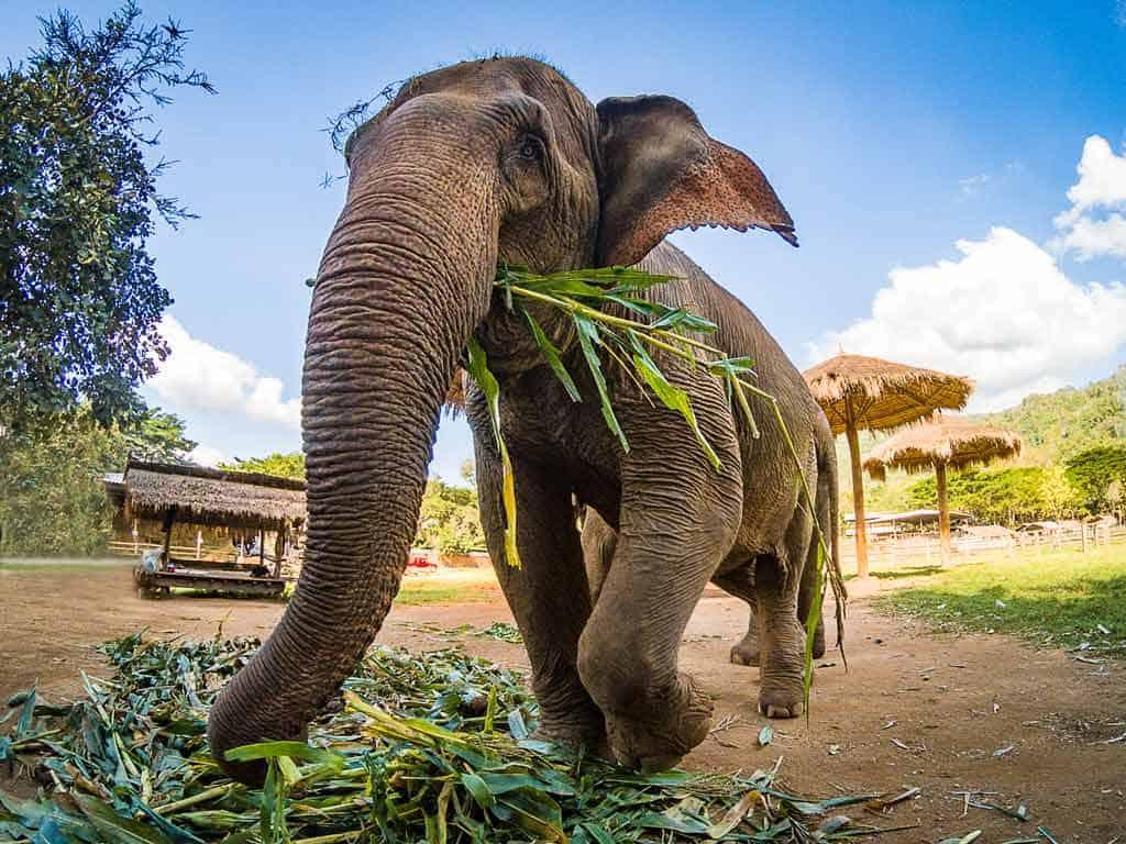 Elephant Nature Park Rescue Sanctuary