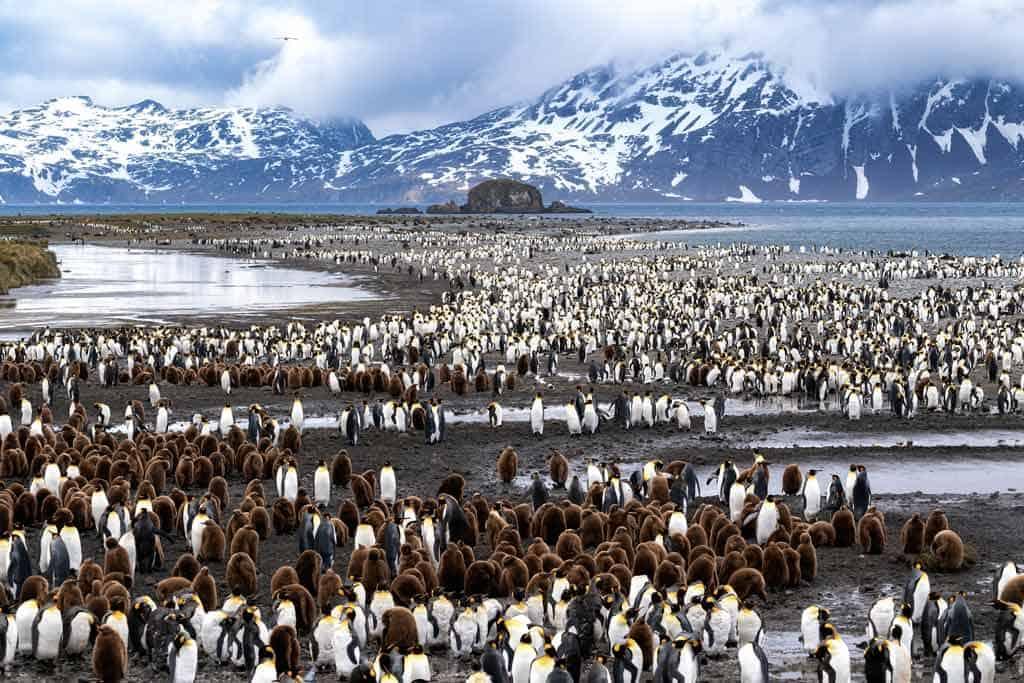 Antarctica South Georgia Falkland Islands Tour