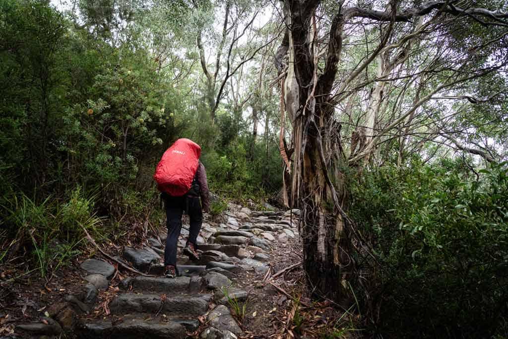 Hiking Through Dense Forest