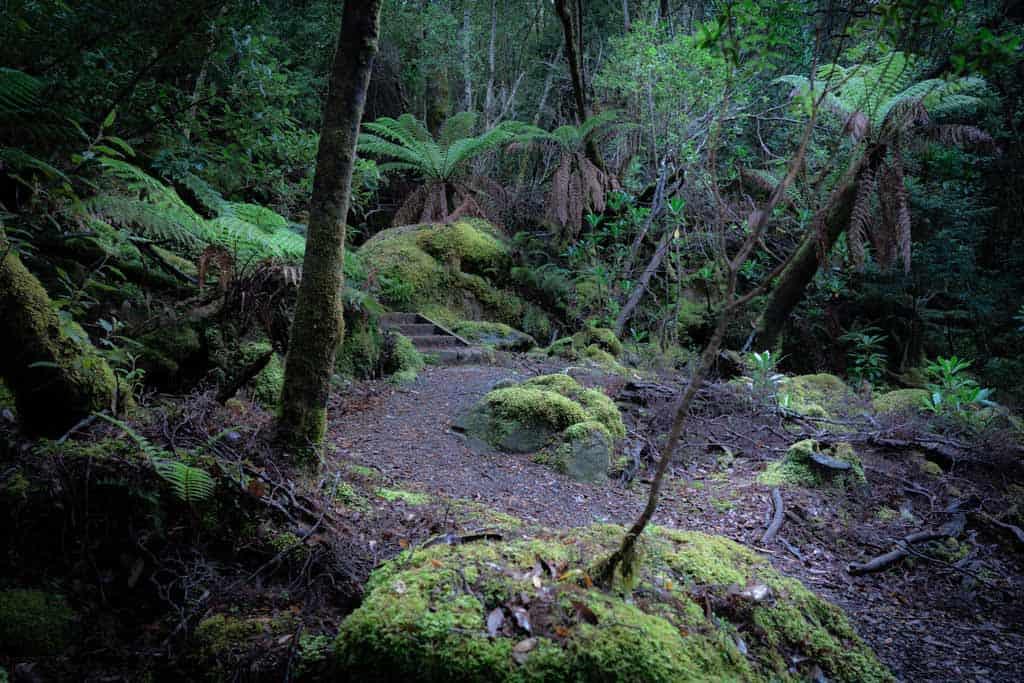Mount Fortescue Tasman National Park