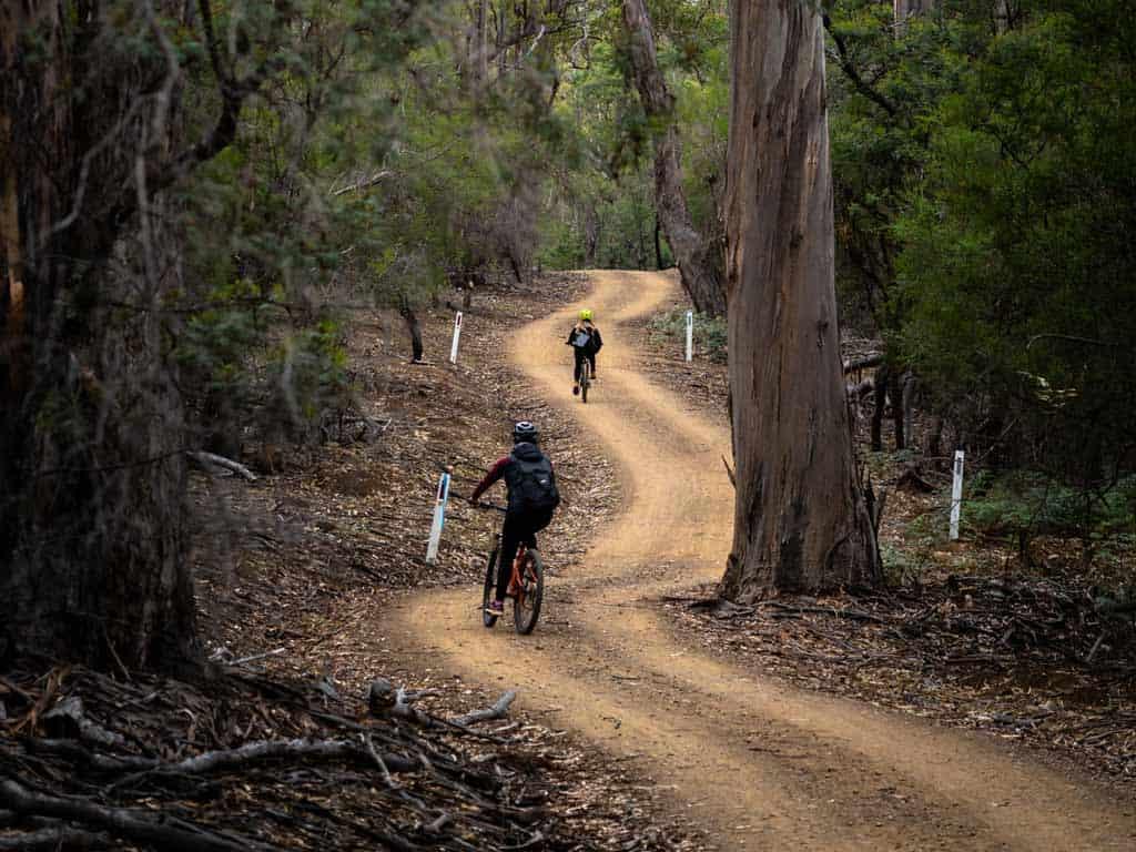 Riding Bikes Through Trees