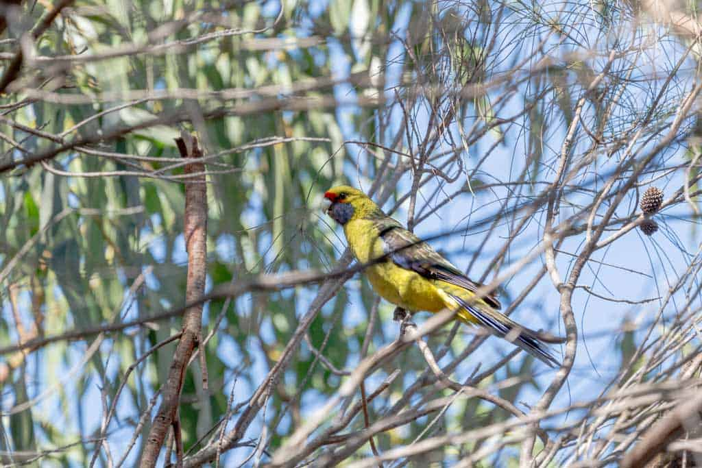 Bird At Green Point