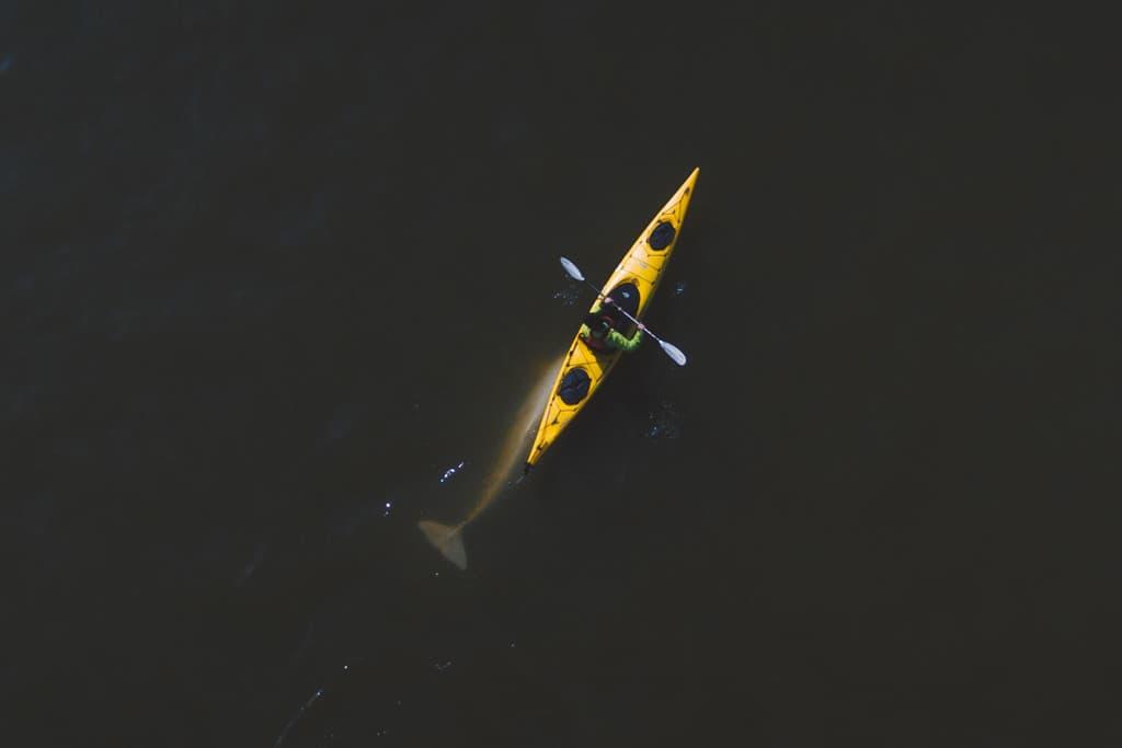 Kayaking With Beluga Whales