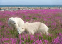 The 16 Best Wildlife Experiences in Canada