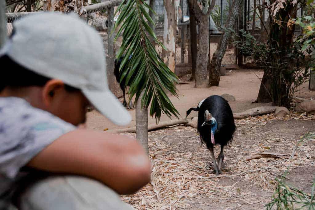 Cassowary Billabong Sanctuary